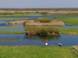 rzeka Biebrza - wczesna wiosna