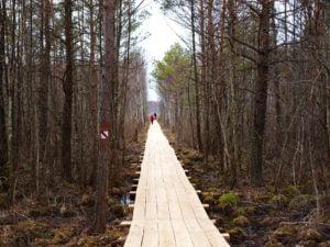 Ścieżka edukacyjna Szuszalewo – Nowy Lipsk z przeprawą promową przez rzekę Biebrzę